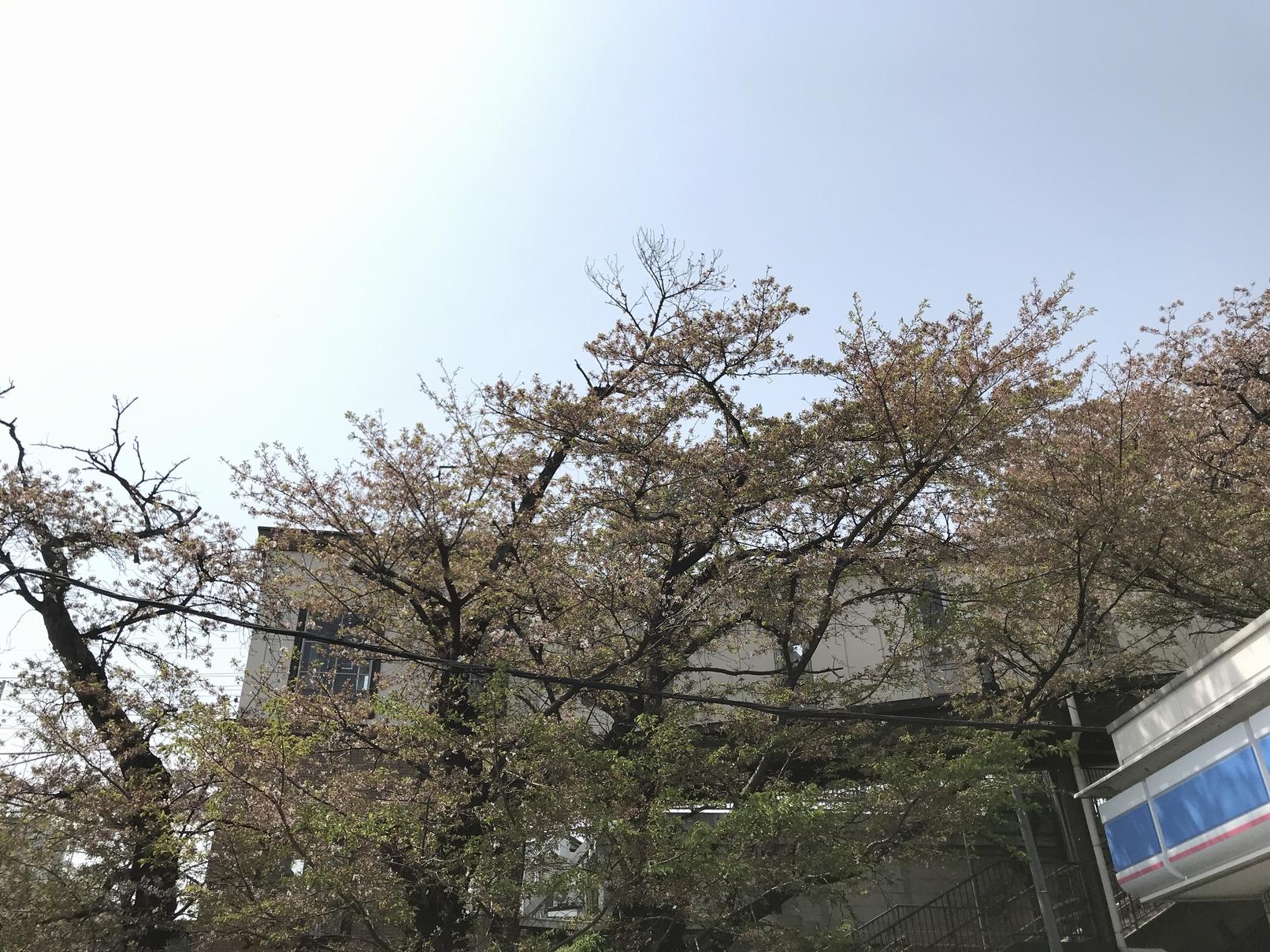 桶川も桜散って・・夏待ち